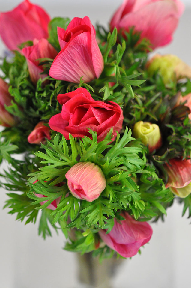 Picture of Anemones