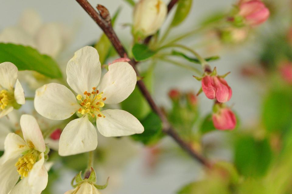 Picture of Blossom