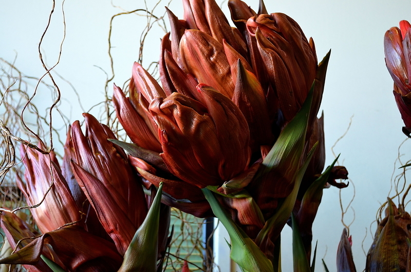 Picture of Gymea FLOWER