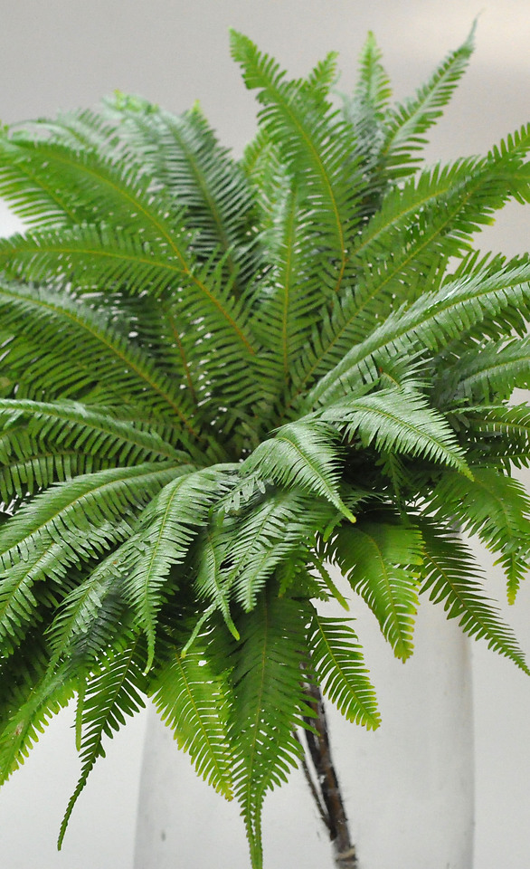 Picture of Fern Umbrella