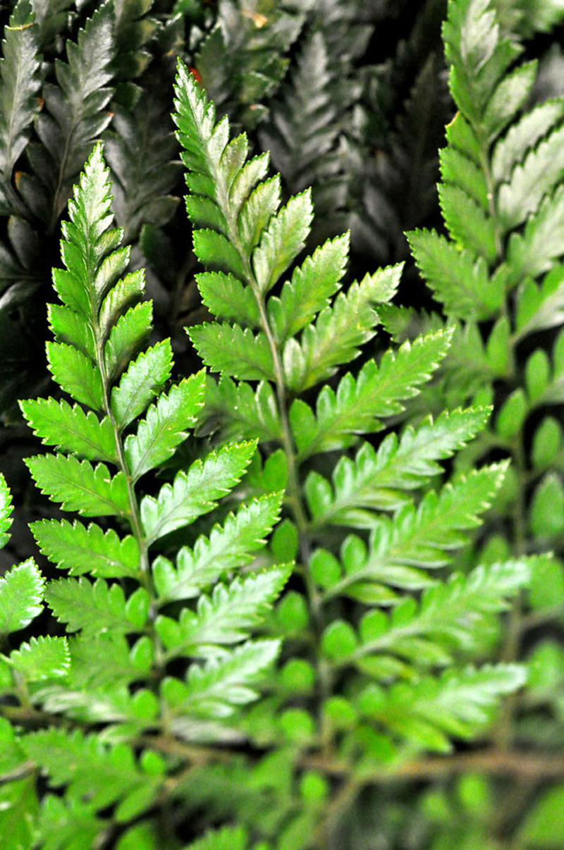 Picture of Fern LEATHER