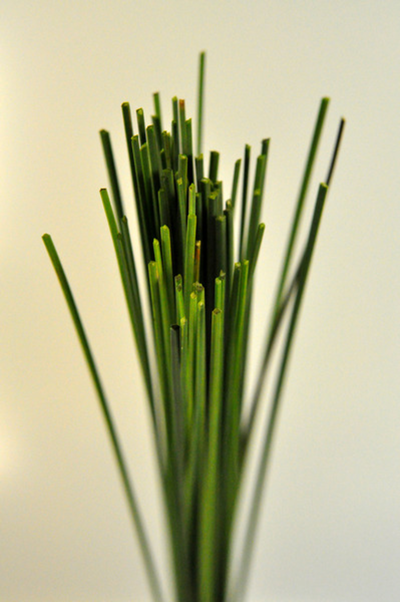 Picture of Steel Grass