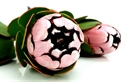Picture for category Protea & Leucadendron