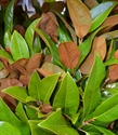 Picture for category Foliage