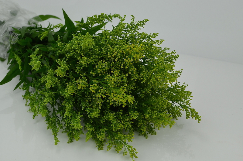 Picture of Golden Rod