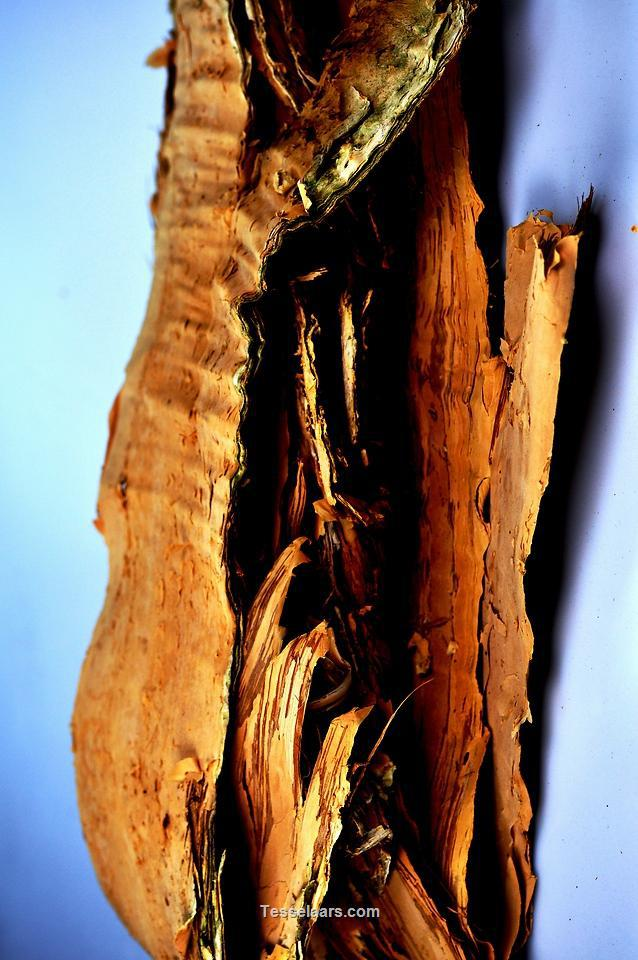 Picture of Coco Bark NATURAL