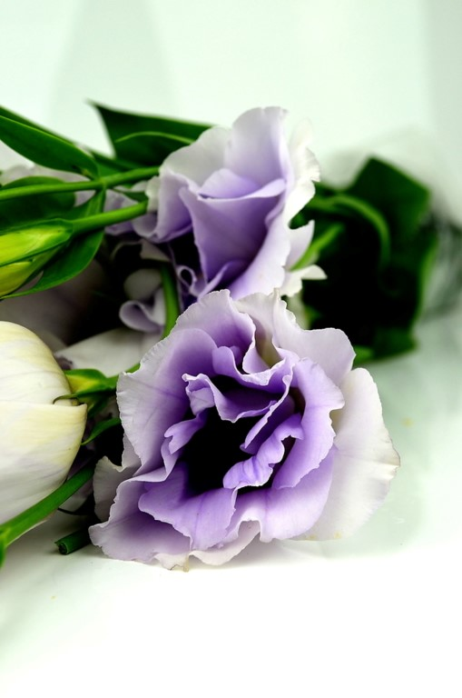 Picture of Lisianthus
