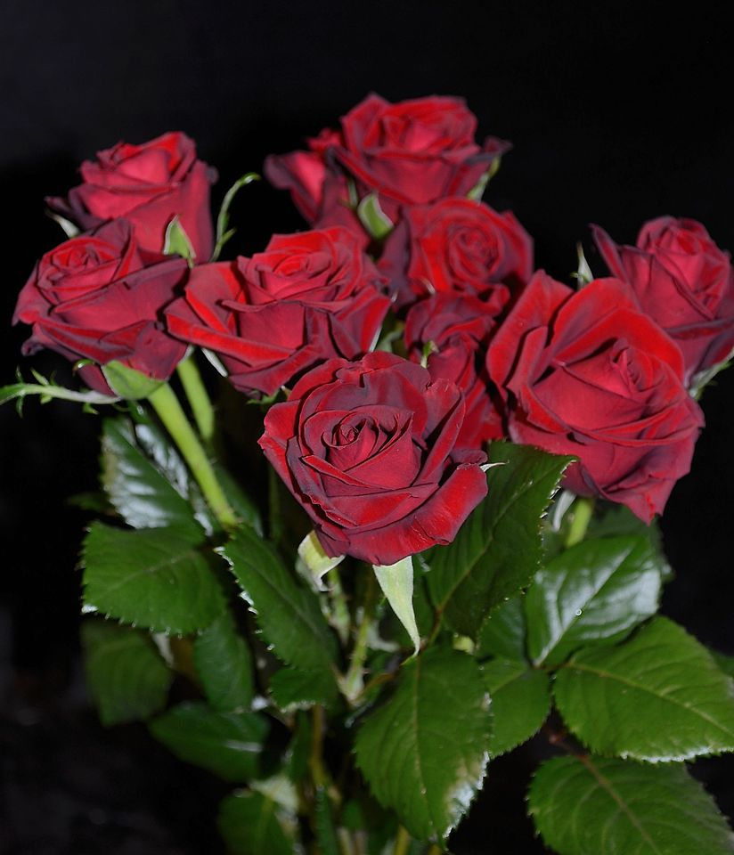 Picture of Rose Red 40cm10