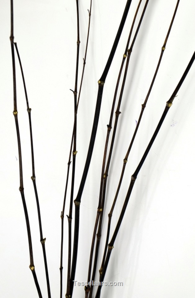 Picture of Bamboo Stick Stem