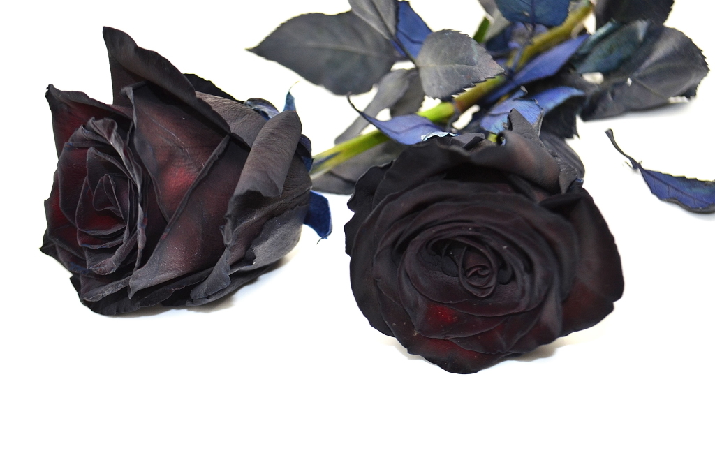 Picture of Rose BLACK