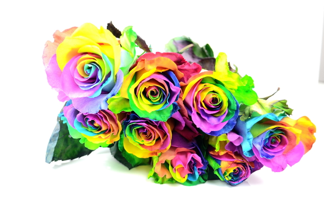 Picture of Rose RAINBOW 12st