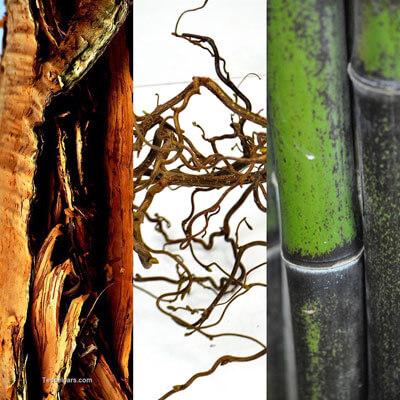 Picture of Banksia Praemorsa x5