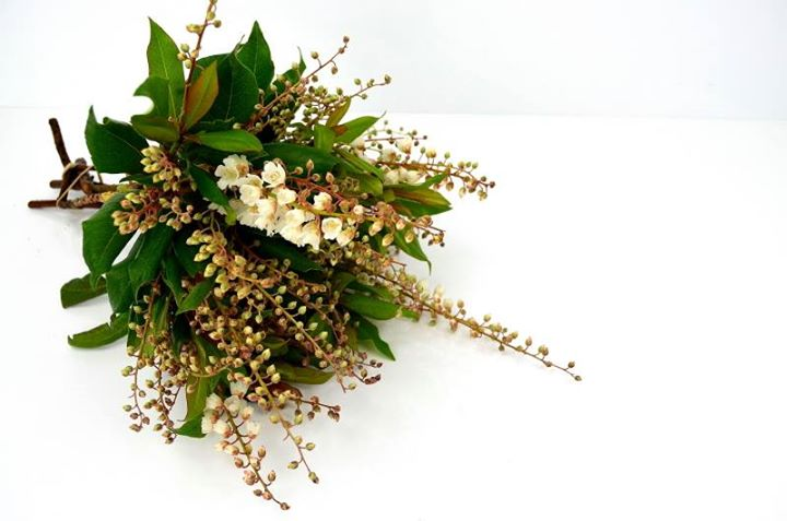 Picture of Clethra